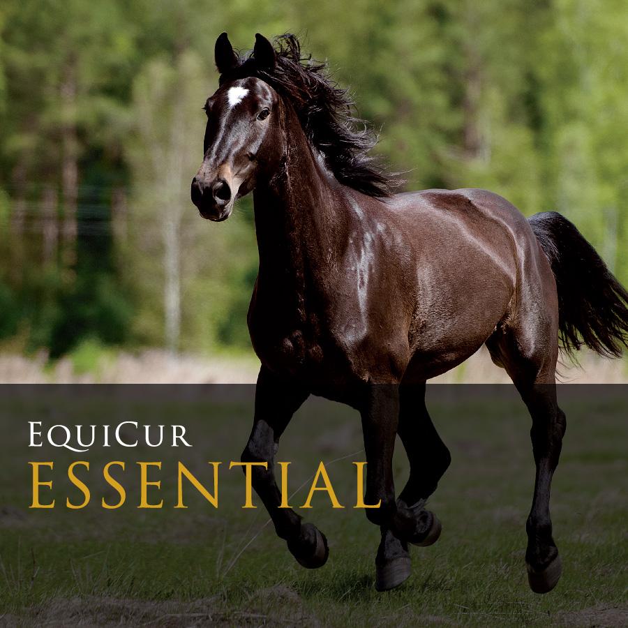 Essential (8kg)